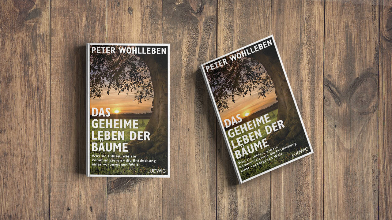 Autumn time is reading time - Wohllebens Waldakademie