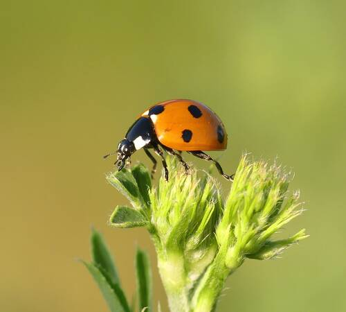 macro photography of orange and black bug perching on plant - Wohllebens Waldakademie